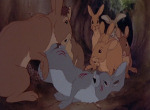 La Garenne de Watership Down - image 4